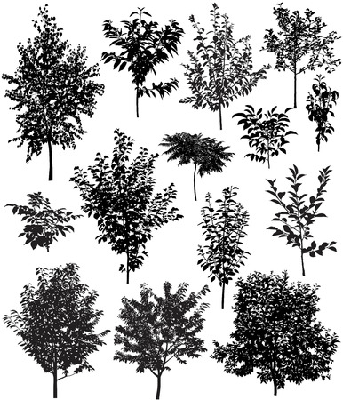 Collection of silhouettes of trees: apple, apricot, birch, cherry, pear, plum, walnut, sumac