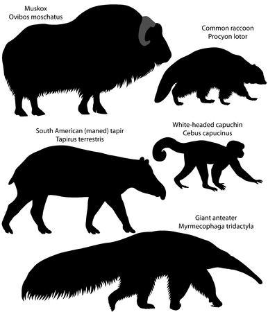 Collection of silhouettes of animals living in the territory of North and South America: muskox, common raccoon, south american tapir, white-headed capuchin, giant anteater