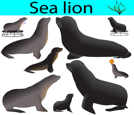 Collection of california sea lions in colour image Stockfoto - 124256109