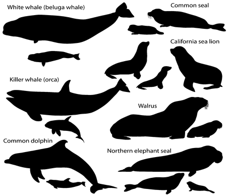 Collection of silhouettes of marine mammals and its cubs Ilustração
