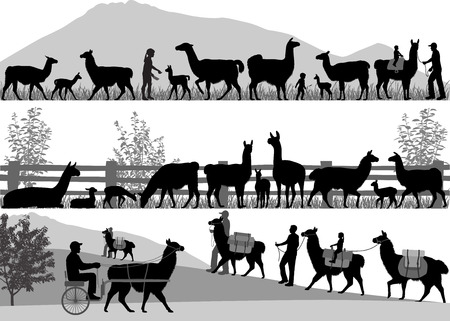 Silhouettes of llamas and its cubs outdoors