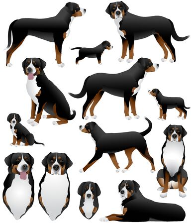 Collection of greater swiss mountain dog breed in colour image