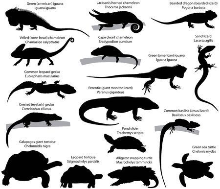 Collection of silhouettes of reptiles: green (american) iguana, perentie (giant monitor lizard), Jacksons horned chameleon, veiled (cone-head) chameleon, cape dwarf chameleon, common leopard gecko, crested (eyelash) gecko, sand lizard, bearded dragon (lizard), common basilisk, pond slider, galapagos giant tortoise, leopard tortoise, alligator snapping turtle, green sea turtle