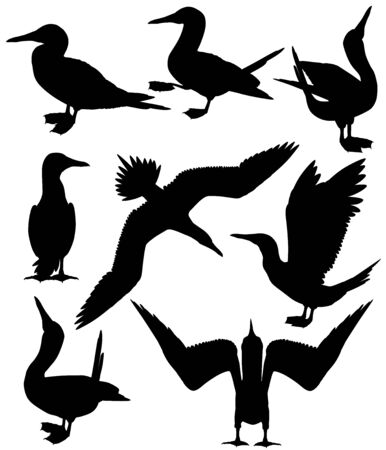 Collection of silhouettes of blue-footed boobies