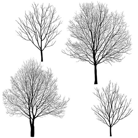 Collection of silhouettes of trees without leaves