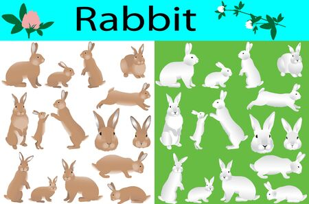 Collection of rabbits and its cubs in colour image Vectores