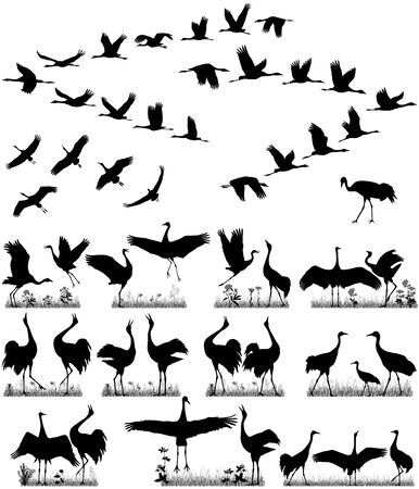 Flight of cranes and pairs of cranes in silhouettes
