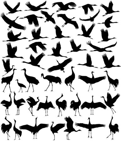 Collection of silhouettes of cranes in different positions Ilustración de vector