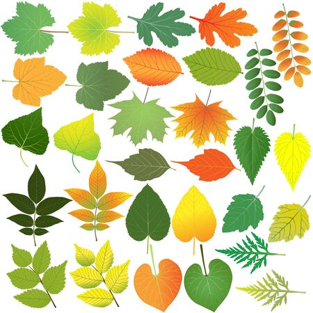 Collection of different species of foliage in colour image: maple, poplar, walnut, linden, elm, acacia, grape, currant, aster, ipomoea, nettle, ambrosia Illustration