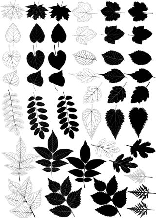 Collection of different species of foliage in silhouette and black-white image: maple, poplar, walnut, linden, elm, acacia, grape, currant, aster, ipomoea, nettle, ambrosia