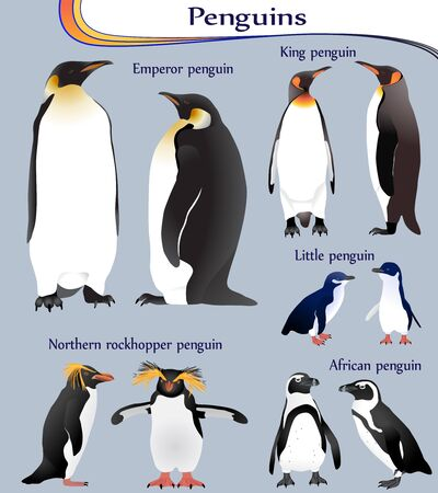 Collection of different species of penguins in colour image: emperor, king, little, african, northern rockhopper