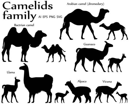 Collection of different species of mammals of camel family, adults and cubs, in silhouette: bactrian camel, arabian camel (dromedary), llama, alpaca, guanaco, vicuna