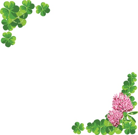 Frame of leaves and flowers of clover on a white background