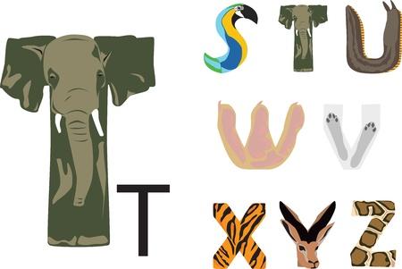 alfabeto con animales: Alfabeto divertido con el tema de los animales salvajes Vectores