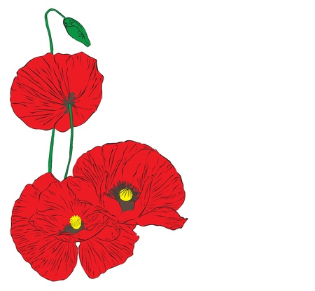 poppies: red poppies on a white background Illustration