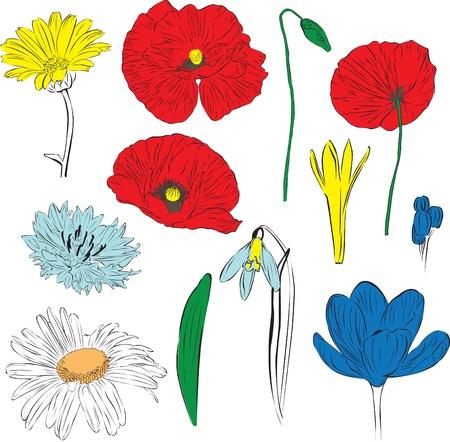 a set of spring flowers  poppies, camomile, cornflower, calendula, pdsnezhnik, crocus Stock Vector - 13536531