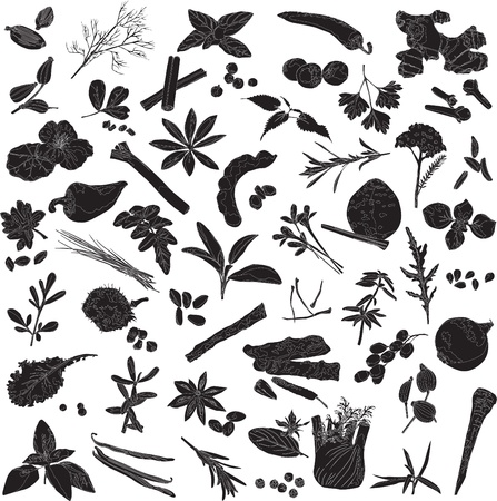 Silhouettes a number of different spices on a white background Illustration