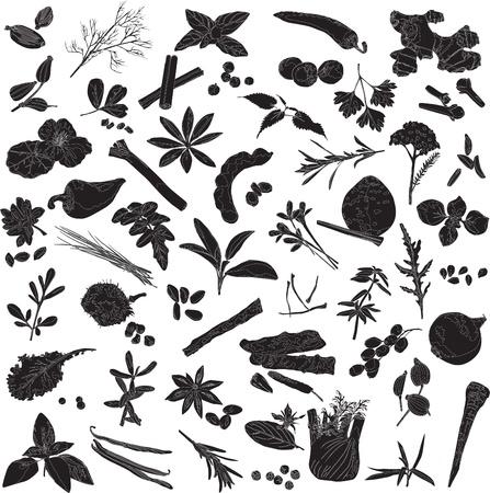 tamarindo: Silhouettes un certo numero di diverse spezie su uno sfondo bianco