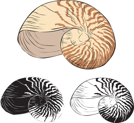 detailed images of shell color and silhouette Vector