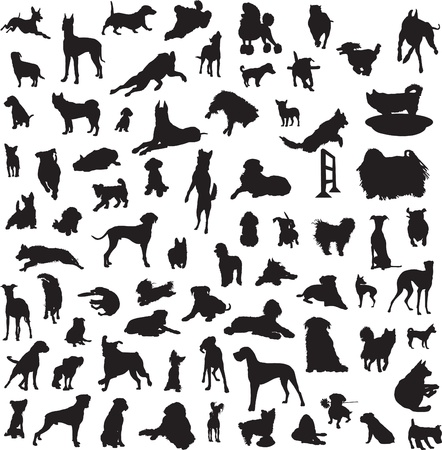 set of silhouettes of different breeds of dogs and for the different classes Vector
