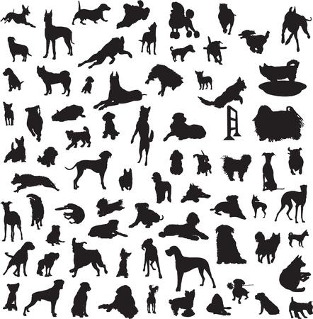 set van silhouetten van verschillende rassen van honden en voor de verschillende klassen