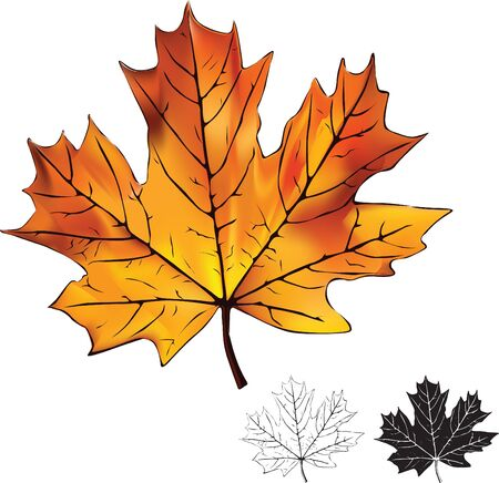 Bright maple leaf on a white background and silhouettes Stock Vector - 14920731