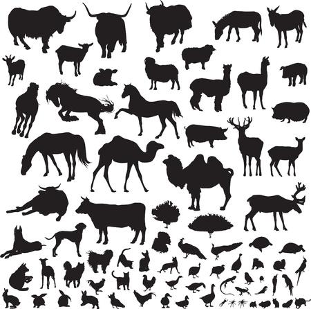 silhouetten van dieren op een witte achtergrond