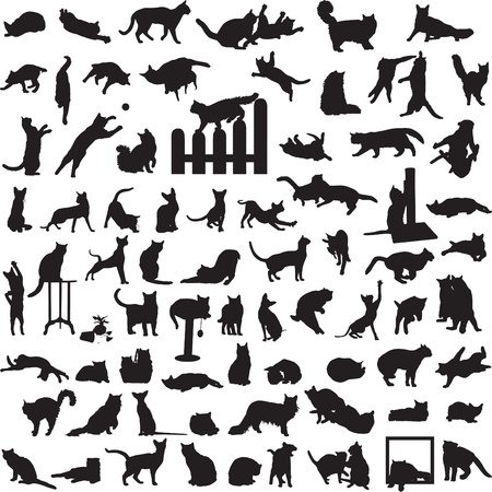 many different cats in a variety of situations Vector