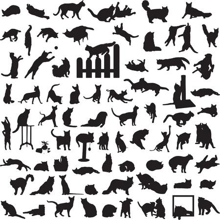 muchos gatos diferentes en una variedad de situaciones Vectores