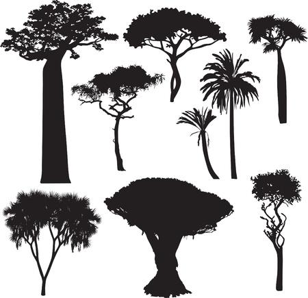 dattelpalme: Satz von Silhouetten der afrikanischen B�umen Illustration