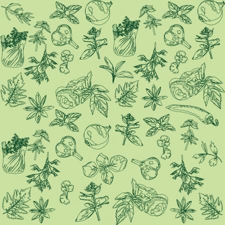 Bezešvé zelené pozadí s bylinkami a kořením