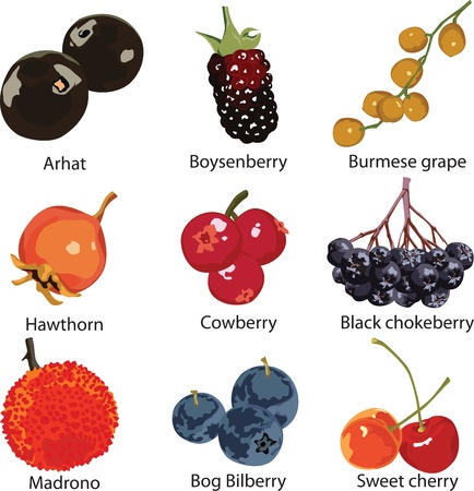 9 different berries on a white background Banco de Imagens - 17953969