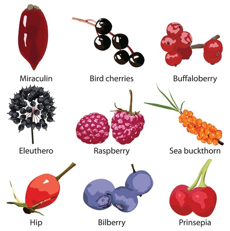 9 verschiedene Beeren auf einem weißen Hintergrund