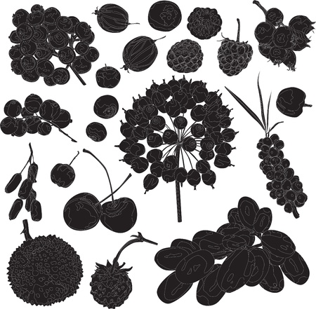 currant: set of silhouettes of different berries on a white background Illustration