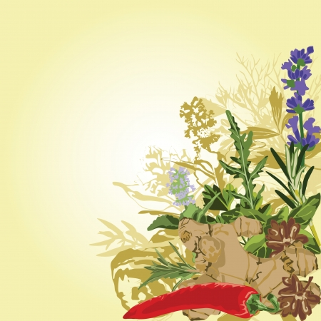 ginger root: Framed with spices in a corner Illustration