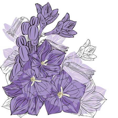 purple bells on white background Vector