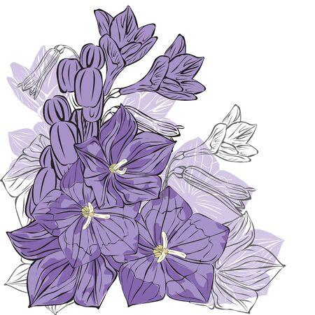 bluebells: purple bells on white background