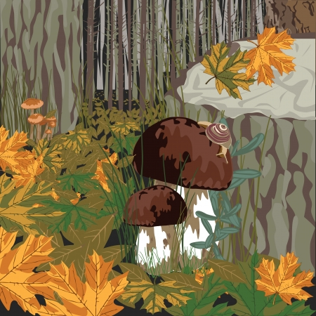 grebe: evening forest with porcini mushrooms on litterfall