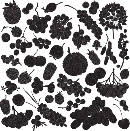 blackberries: silhouettes of different berries on a white background