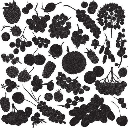 enebro: siluetas de diferentes frutas sobre un fondo blanco