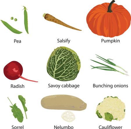 scallion: set of different vegetables