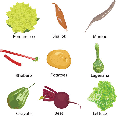 beetroot: set of different vegetables isolated
