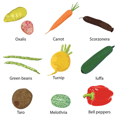 gherkin: Vegetables on a white background  Illustration