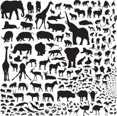 Meer dan 200 silhouetten fauna van Afrika
