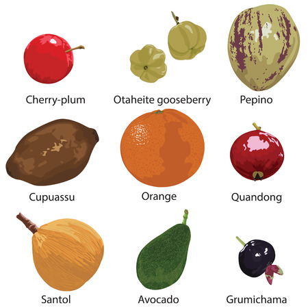 myrobalan: set of different fruits on a white background