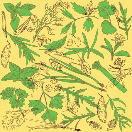 cilantro: bright pattern with spices and herbs