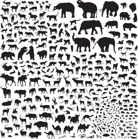 Mehr als 300 Silhouetten von Tieren Standard-Bild - 35505758