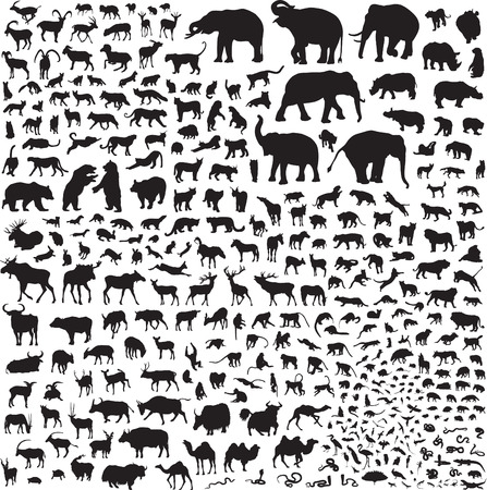 snow leopard: More than 300 silhouettes of animals