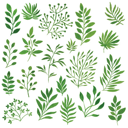 green branches: set of green branches painted in watercolor Illustration