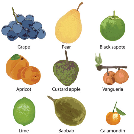 A set of different fruits. Grapes, pear, black sapota, apricot, custard apple, vangueria, lime, baobab, calamondine on a white background.